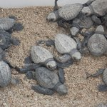 SEA TURTLES HATCHED ON BEACH