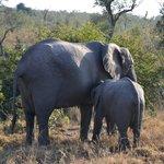 Elephants - Idube 2014