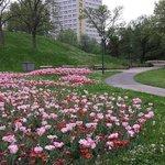 公園から見えるホテル(公園の散策お勧め!!)