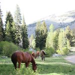 horses out roaming and grazing