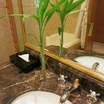浴室內綠色植物