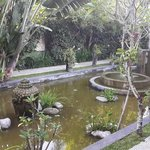The pond at the dining area