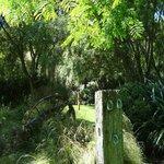 Kahikatea Gardens