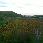 View from Mission Estate Vineyard