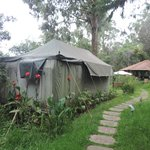 Swiss Tent with Green Surroundings