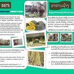 Elephant food