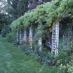 Gardens in back of inn