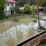 Jardin et ligne d'eau