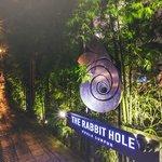 The Rabbit Hole照片