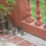 Babies!! Seen from our room!