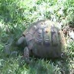 Turtles area
