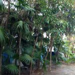 Campground in the jungle. We loved it!