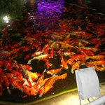 fish pond - can do fish feeding