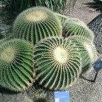serre tematiche - cactus