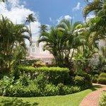 Cobblers Cove gardens