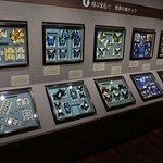 Nawa Insect Museum Haimurubushi