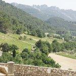 mountain top view of hillside vineyard.