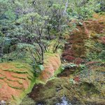 Colourful mosses along the walls..