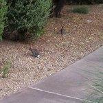 Rabbits and quail