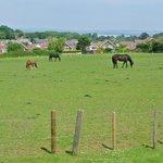 the neighbor's horses next door