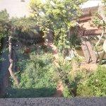 Gartenblick aus Fenster 3.Etage