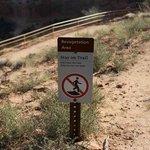 revegetation area, Colorado National Monument, Sep 2013