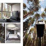 Photo de Treehotel