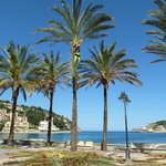 Palms at Port Soller