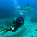 Reef shark makes a pass at Milica