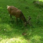 Tiere im Wildpark