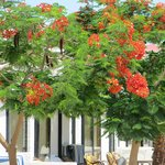 Растительность отеля