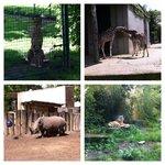 Muenster zoo