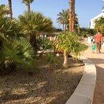 El jardín lleno de palmeras