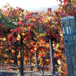 Fall colors at Hidden Oak Winery