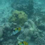 snorkeling near water villas