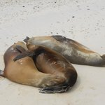 the sea lions in other island