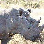 We saw Rhinos