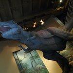 Dinosaur exhibits