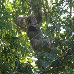 Sloth making its getaway