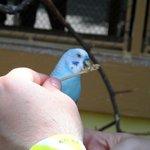 Feeding birds in the aviary