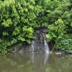 The serene waterfall