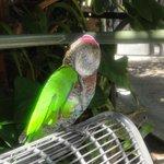 Общительный попугай :)