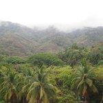 Tropical Rainforest to the back