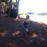 bosco della feniglia e cervi
