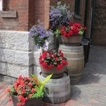 Colourful flower tubs