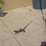iguana running around pool