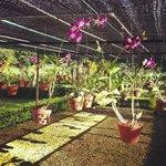 Orchid Garden in Hotel Area
