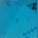Debris in the pool