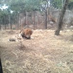 Lion and Cheetah Park