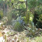 Ботанический сад в Бланес